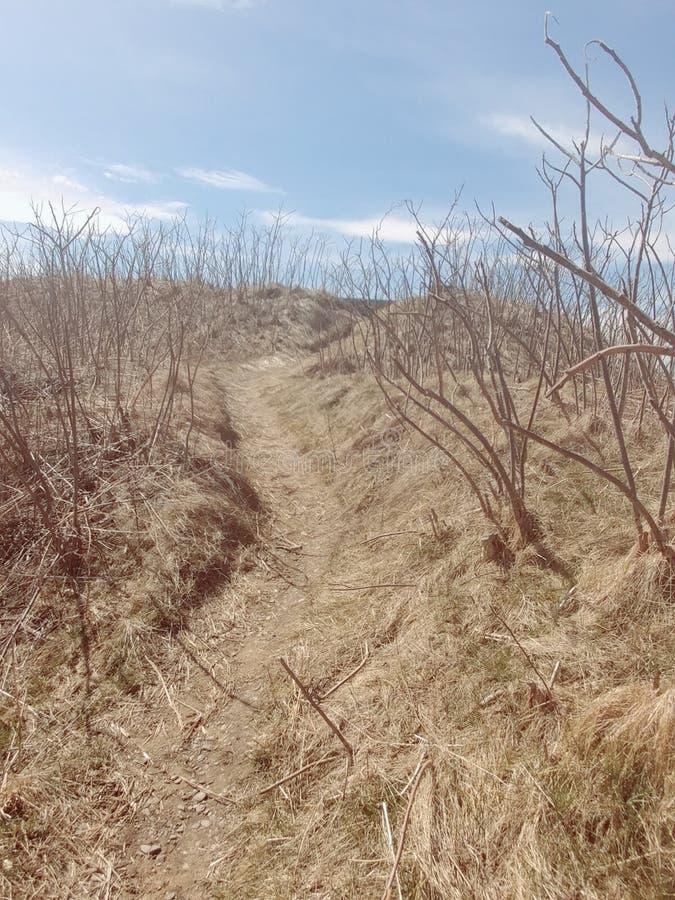 Buissons de plage images libres de droits