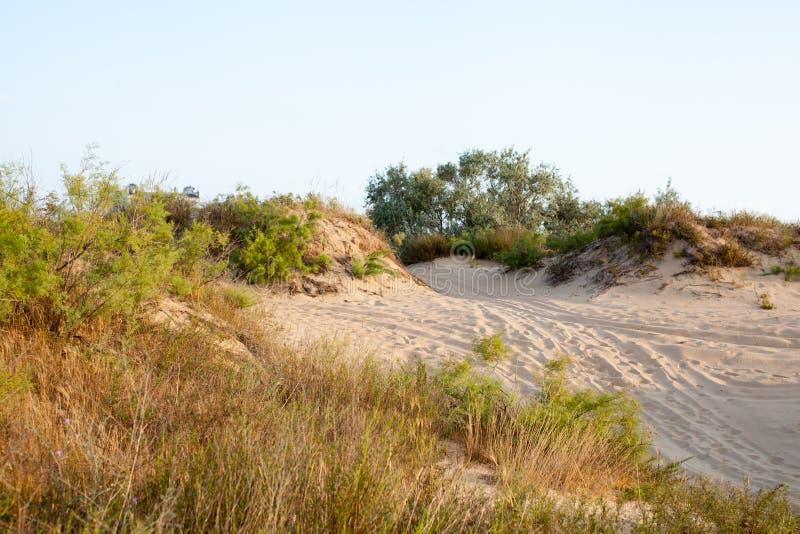 Buissons et arbres sur des dunes de sable avec sec à l'aube photographie stock