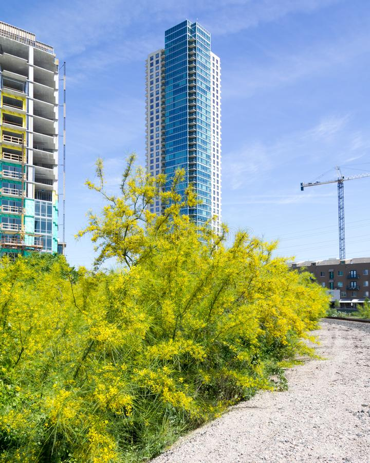 Buissons jaunes avec l'édifice haut photos libres de droits