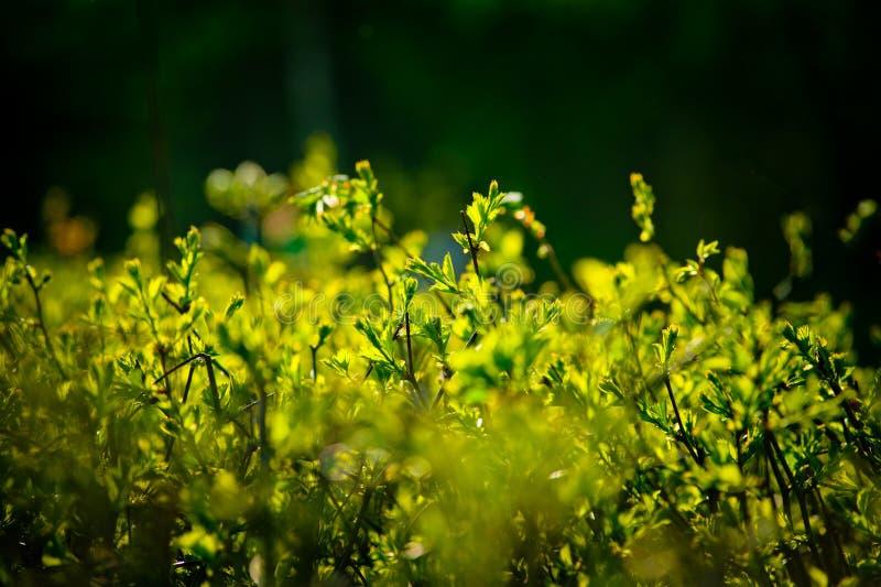 Buissons sous le soleil photos libres de droits