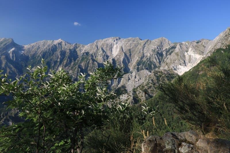 Buissons sur les Alpes d'Apuan dans Versilia À l'arrière-plan le moun photos stock