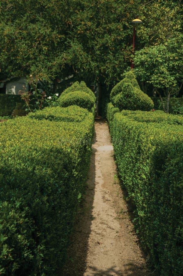 Buissons verts feuillus sur un jardin photos libres de droits