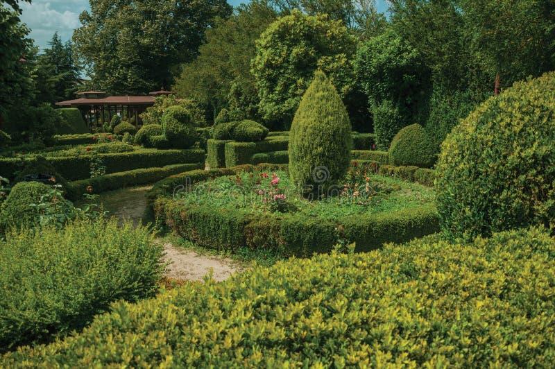 Buissons verts feuillus sur un jardin photo libre de droits