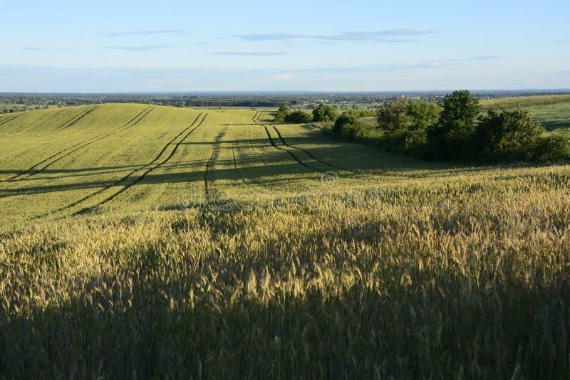 Buiten de stad - landelijk landschap - een gebied stock foto