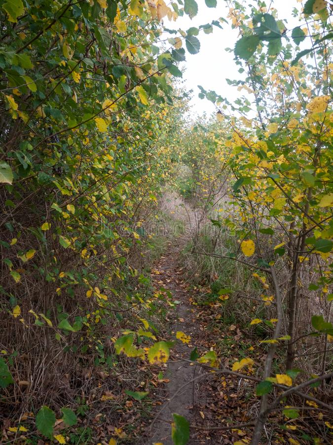 buiten gele en groene bladeren het vallen het gebladertenatu van de dalingsherfst royalty-vrije stock afbeeldingen