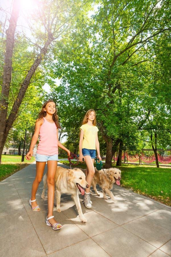 Buiten lopend honden in park alle stock afbeeldingen