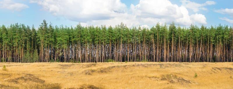Buitengewoon breed breed panorama van pijnboom bos en bewolkte hemel W royalty-vrije stock fotografie