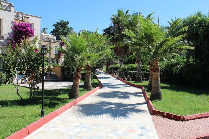 Buitenhuizen en palmen in Turkije stock afbeeldingen