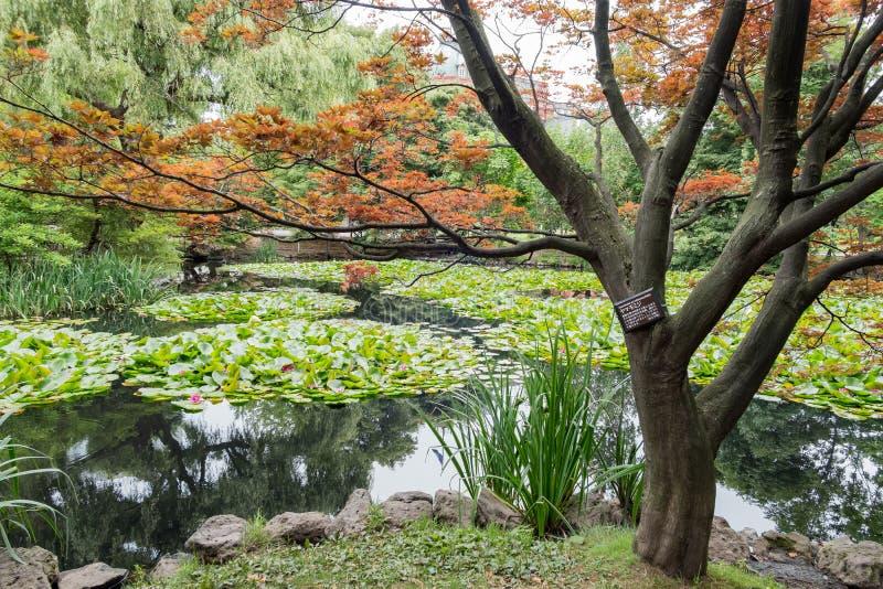 Buitenpark van het Vroegere Regeringskantoor van Hokkaido stock foto's