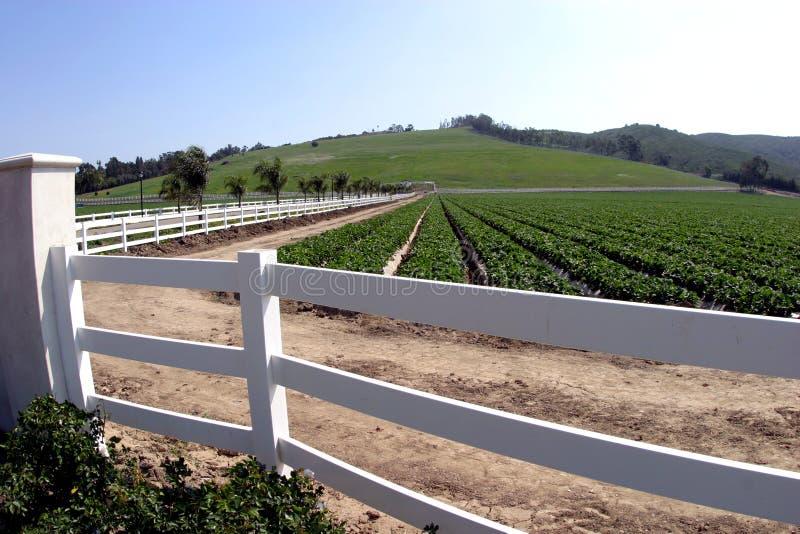 Buitensporig Landbouwbedrijf Stock Fotografie