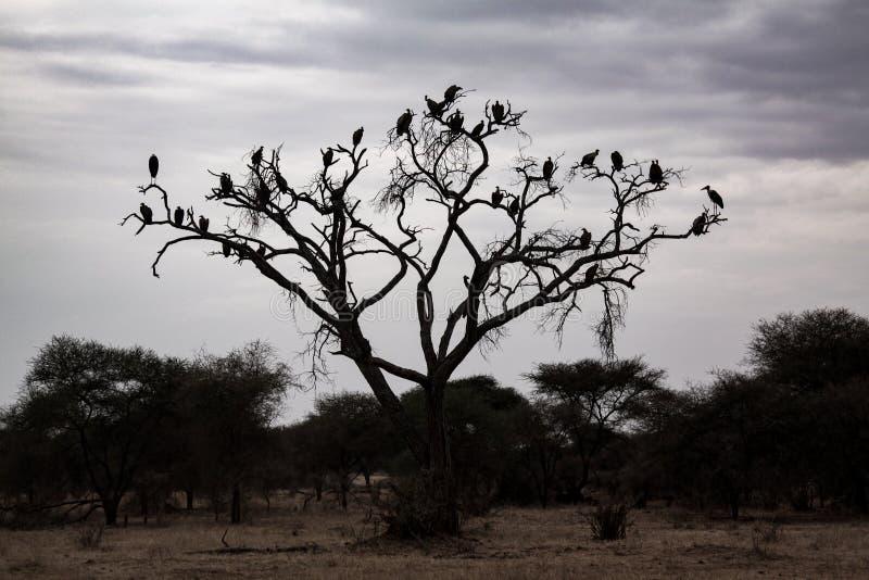 Buitre del árbol imagenes de archivo
