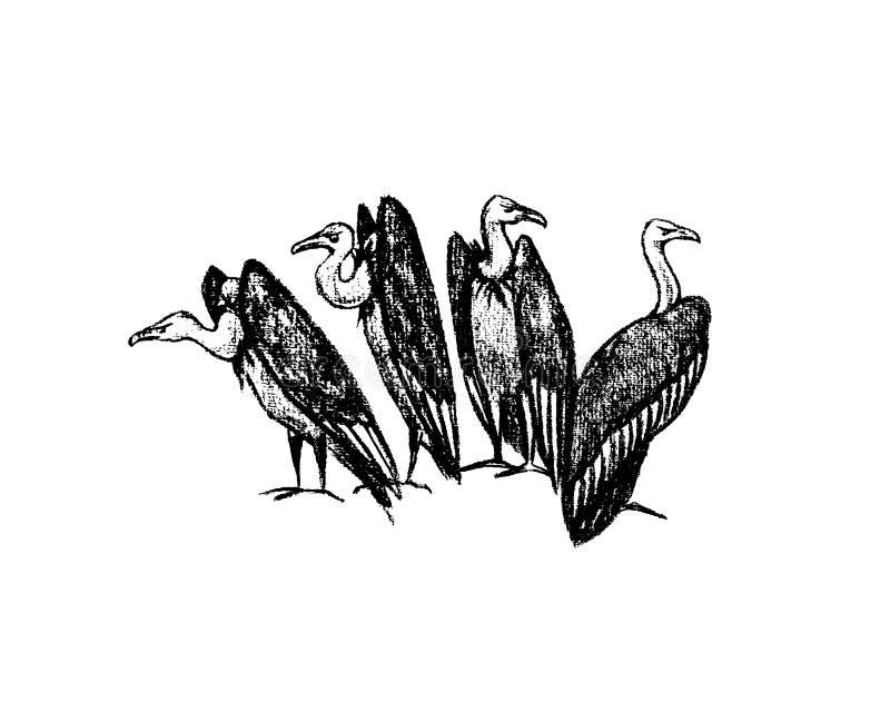 Buitres dibujados mano libre illustration