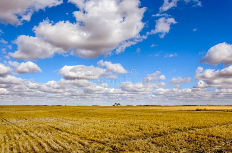 Bujny, biel chmurnieje przeciw niebieskiemu niebu nad kolor żółty pochylony obrazy royalty free