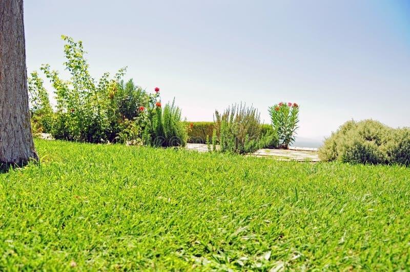 Bujny wynosił ogród z rozmarynami i różanymi krzakami fotografia stock
