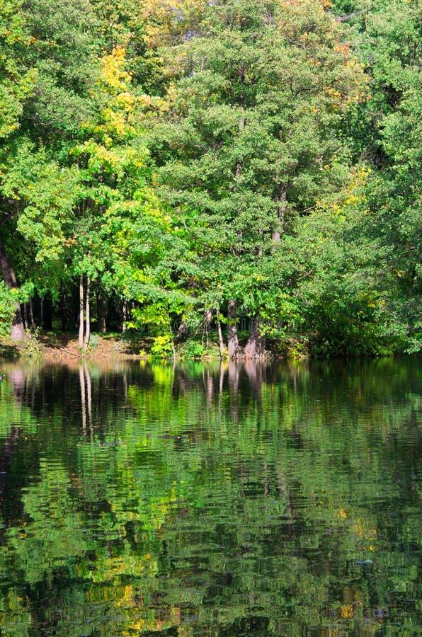 Bujny zieleni drzewa odbija w nawadniają powierzchnię fotografia royalty free