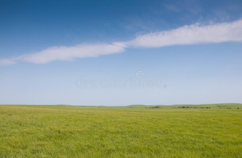 Bujny zielona wiosna trawa w preryjnym paśniku fotografia stock