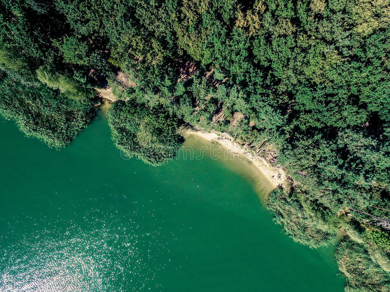 Bujny zielony las na banku jezioro obrazy royalty free