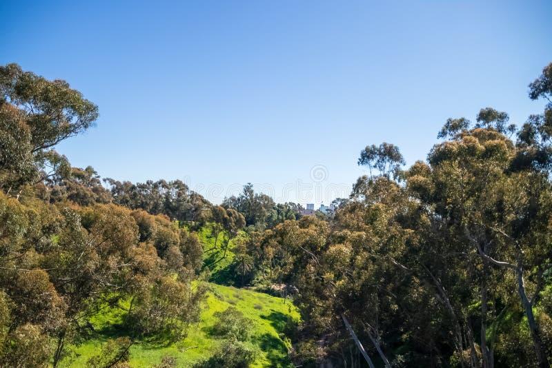 Bujny zielony przyrost po zimy burzy na San Diego zbocze góry obrazy stock