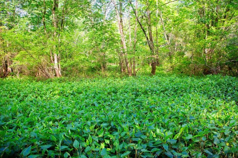 Bujny zielony przyrost obraz stock