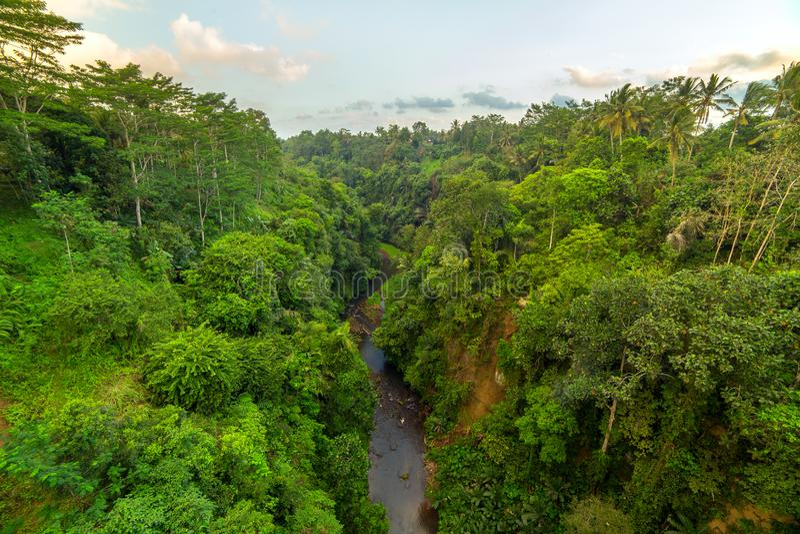Bujny zielony tropikalny tropikalny las deszczowy w Bali fotografia royalty free