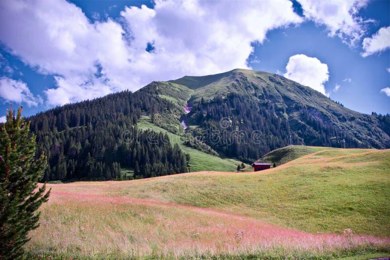 Bujny zielony wysokogórski szczyt pod błękitnym chmurnym niebem w Berwang, Tirol zdjęcie stock