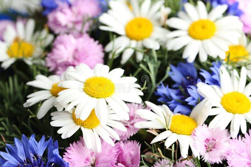 Bukett av blommor royaltyfri bild