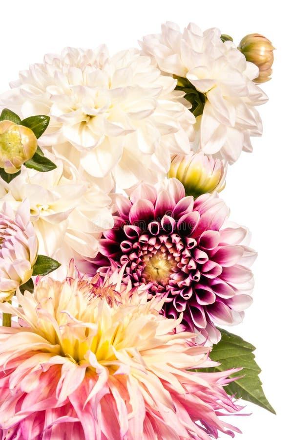 Bukett av dahliablommor som isoleras på en vit bakgrund arkivfoton