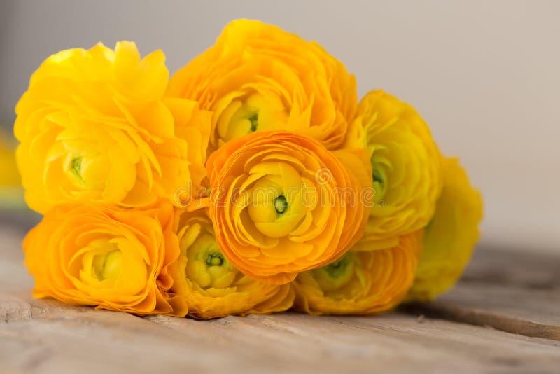 Bukett av den gula ranunculusen royaltyfri foto