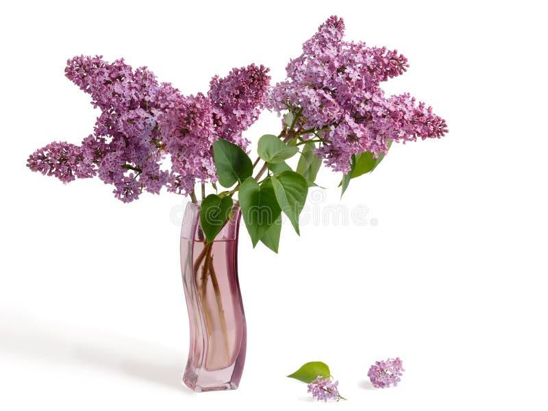 Bukett av den purpurfärgade lilan för vår i en behagfull krökt rosa vas som isoleras på en vit bakgrund fotografering för bildbyråer