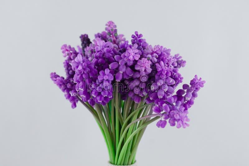 Bukett av den violetta muscarien just rained Vit bakgrund royaltyfri foto