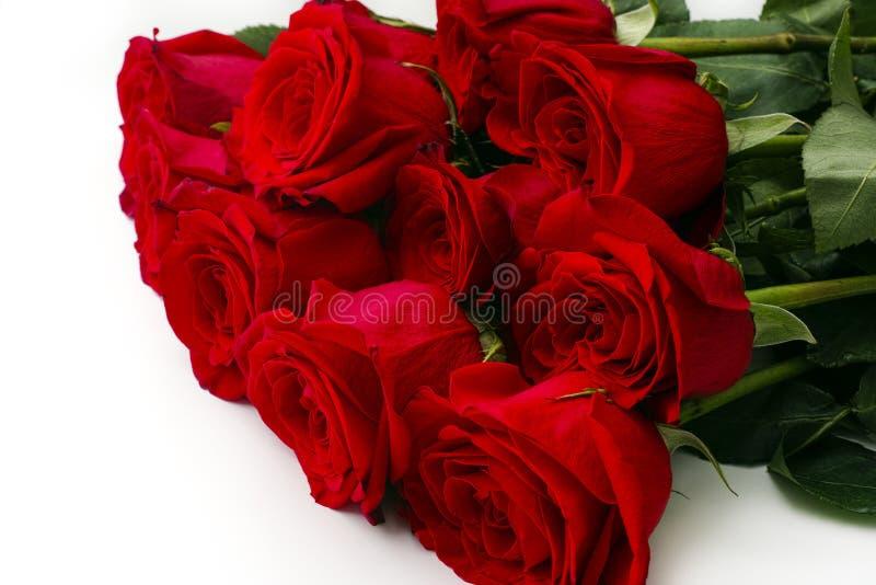 Bukett av elva röda rosor på vit bakgrund royaltyfria foton