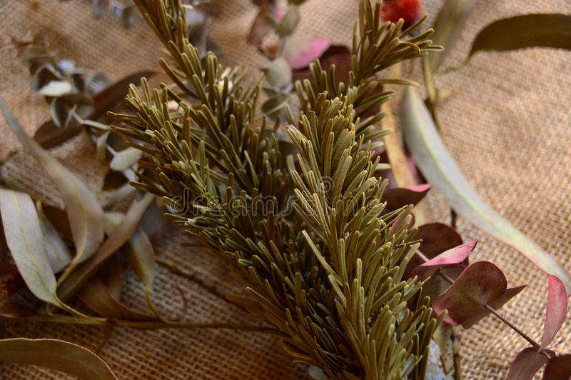 bukett av eukalyptuns och gran royaltyfri foto