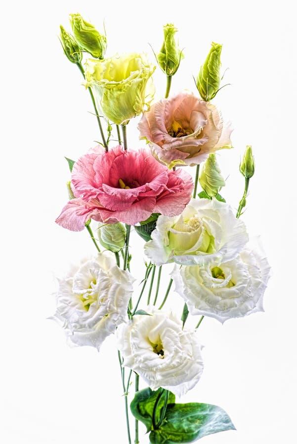 Bukett av färgade små blommor som isoleras på vit bakgrund arkivfoton