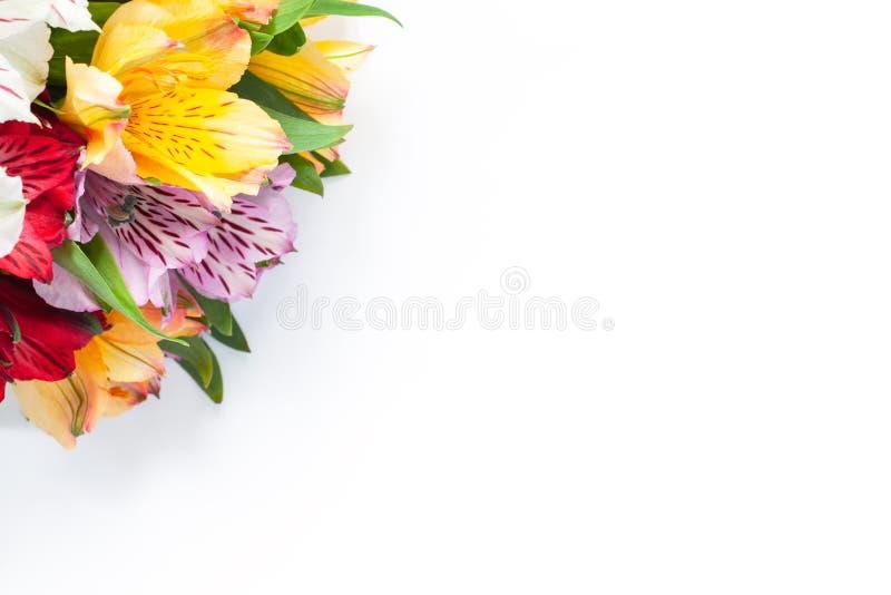 Bukett av färgrik blommaalstroemeria på vit bakgrund Lekmanna- lägenhet horisontal Modell med kopieringsutrymme för hälsningkort arkivfoton