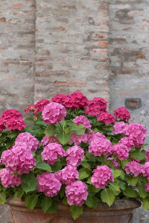 Bukett av färgrika blommor i en trädgårds- Italien royaltyfri foto