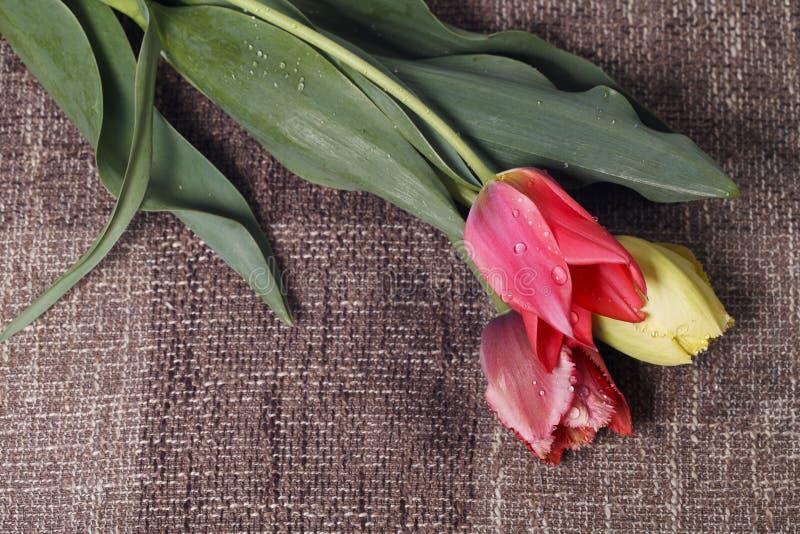 Bukett av färgrika tulpan royaltyfria bilder