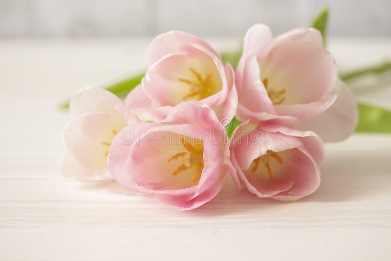 Bukett av försiktigt rosa tulpan på den vita trätabellen Tunna kronblad av tulpanblommor med stamens och persikor, grupp av rosa  royaltyfria bilder