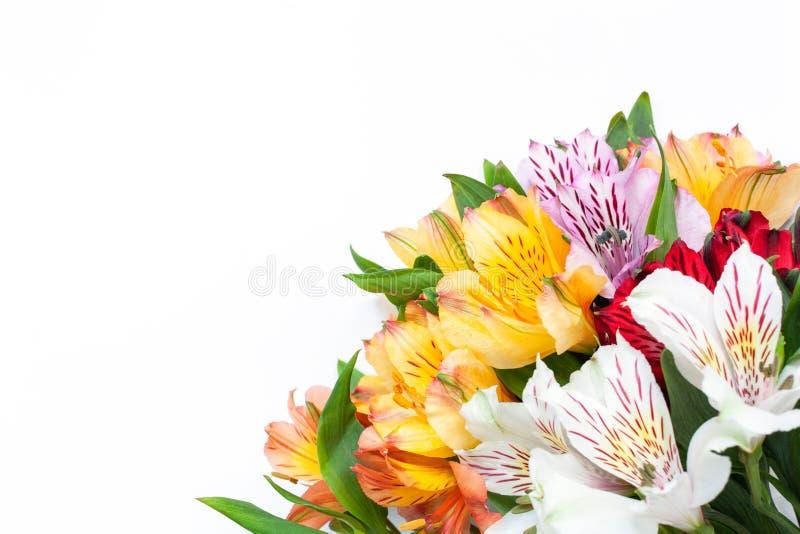Bukett av f?rgrik blommaalstroemeria p? vit bakgrund Lekmanna- l?genhet horisontal Modell med kopieringsutrymme f?r h?lsningkort arkivfoton