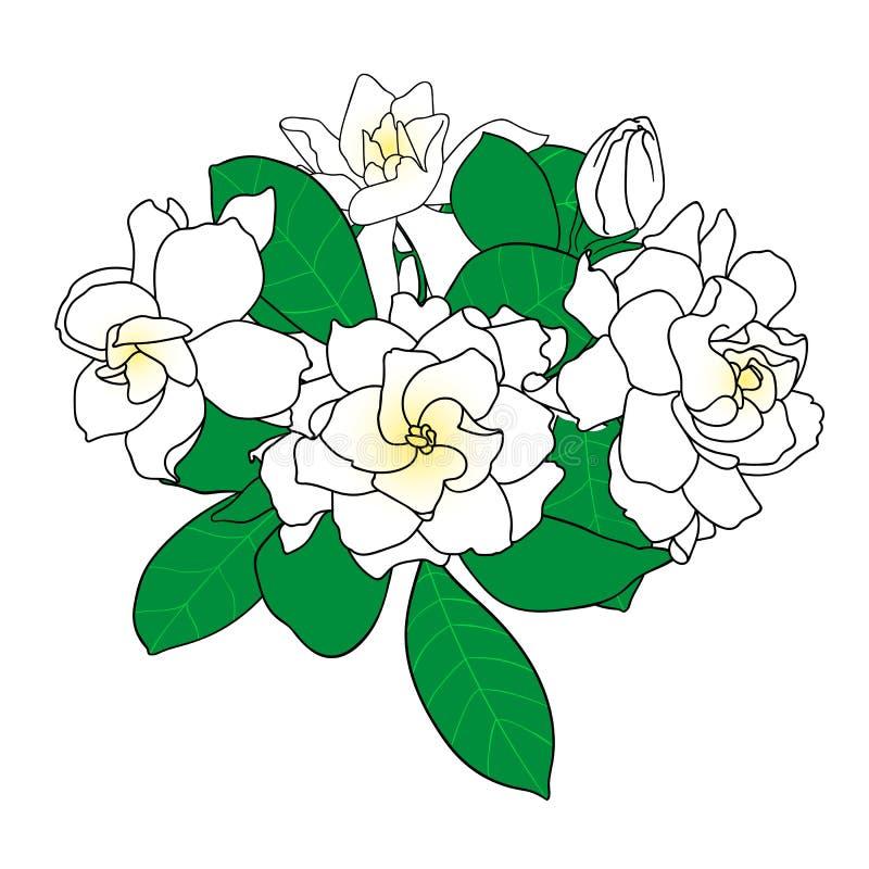 Bukett av gardeniajasminoides, uddejasmin, danh-danh vektor illustrationer