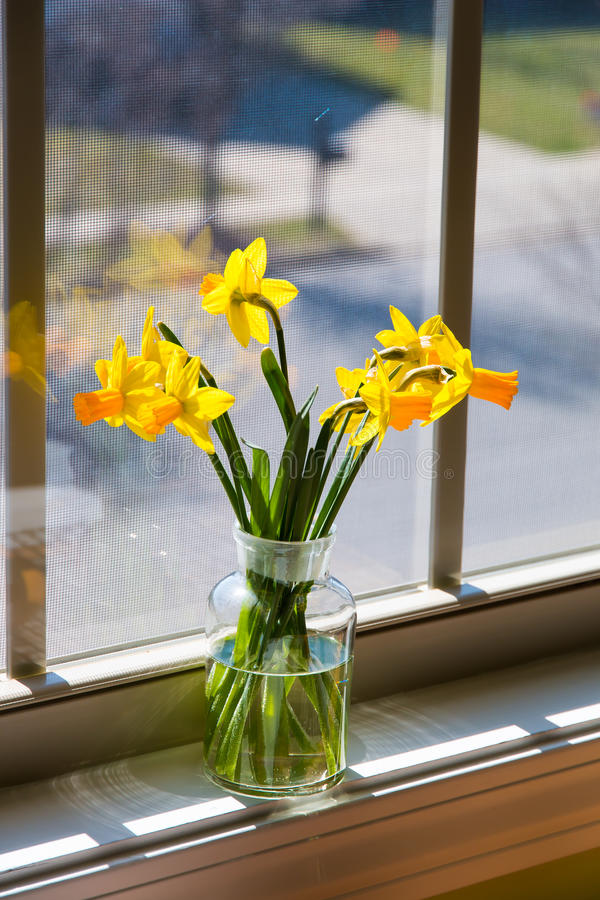 Bukett av gula påskliljor i en glass vas nära fönster med beträffande arkivfoton