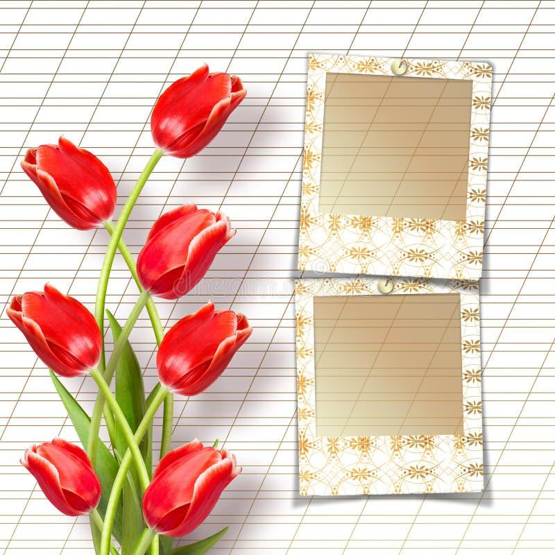 Bukett av härliga röda tulpan med glidbanor royaltyfria foton
