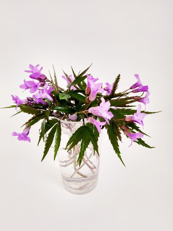 Bukett av härliga rosa lösa blommor i exponeringsglas på vit arkivfoton