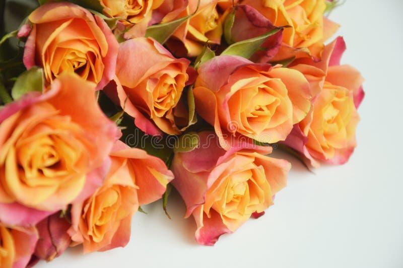 Bukett av härliga rosa och orange rosor på en ljus bakgrund Bukett av blommor fotografering för bildbyråer