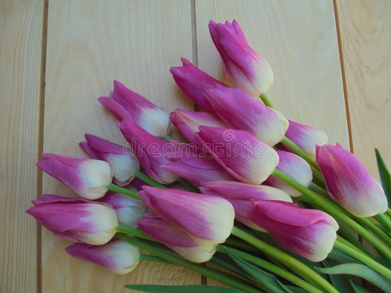 Bukett av härliga rosa och vita tulpan på ljusa träbräden royaltyfri foto