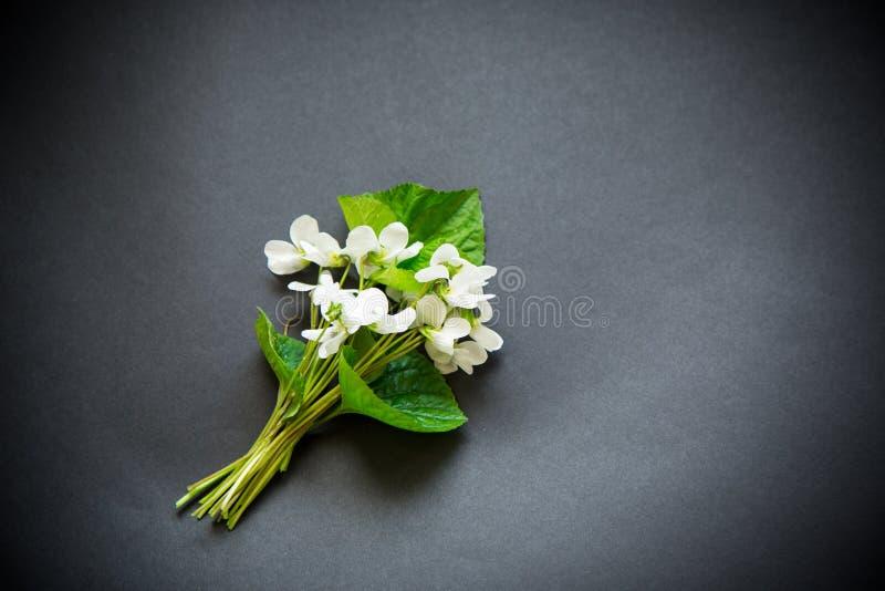 Bukett av härliga vita violets för trädgård på en svart royaltyfri fotografi