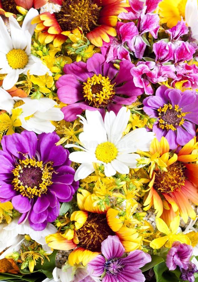 Bukett av lösa blommor arkivbild