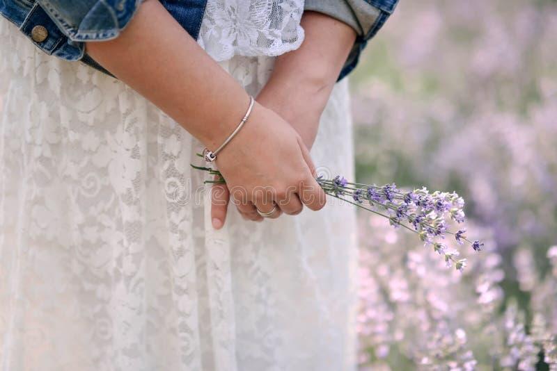 Bukett av lavendel royaltyfri bild