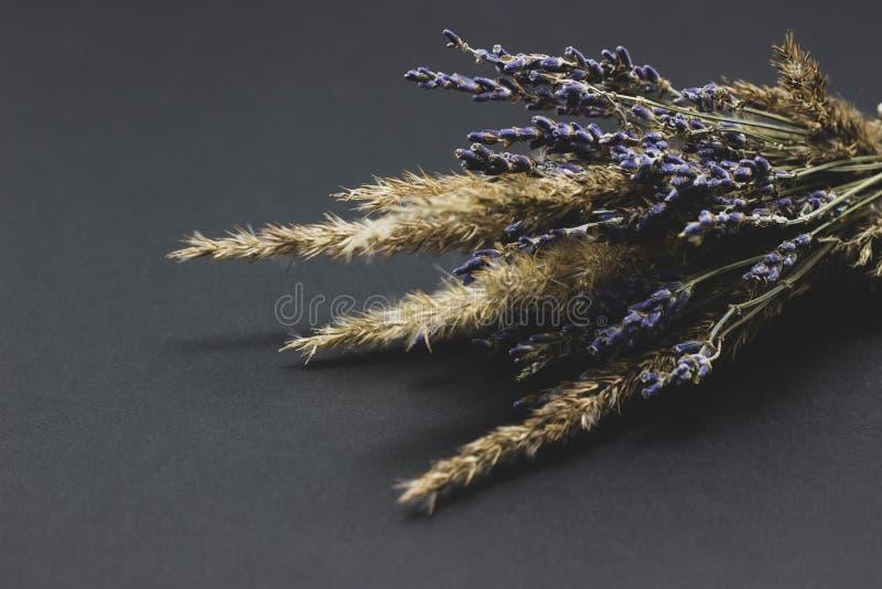 Bukett av lavendel och sädesslag på en mörk bakgrund royaltyfri bild