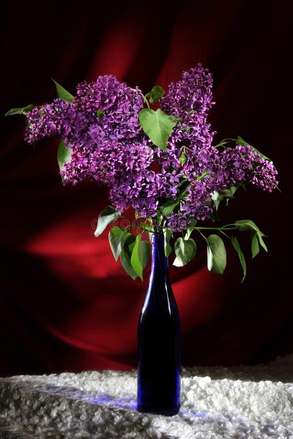 Bukett av lyxiga purpurfärgade lilor på röd sammet arkivbilder