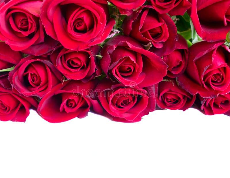 Bukett av mörker - röda rosor royaltyfria bilder